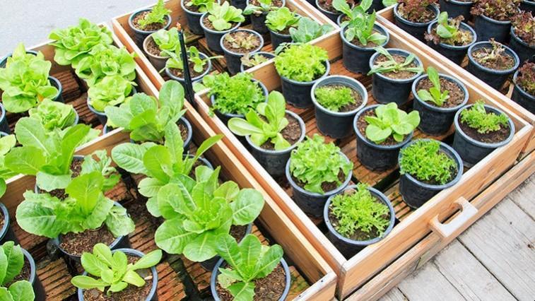 Z nasion wyhodujesz warzywa i kwiaty. Jak to zrobić?